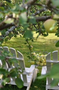 Apples hanging over chairs