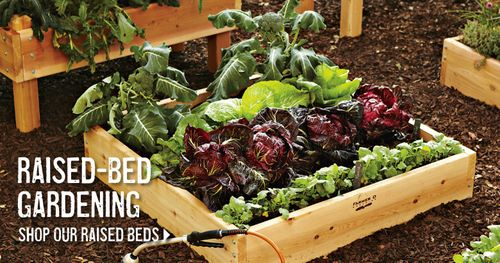 WS raised beds