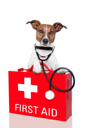 Jack russel first aid