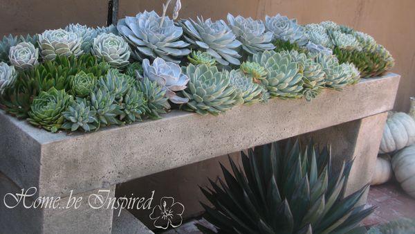 Succulents at RG