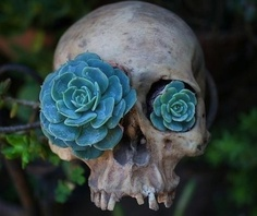Skull with succulants