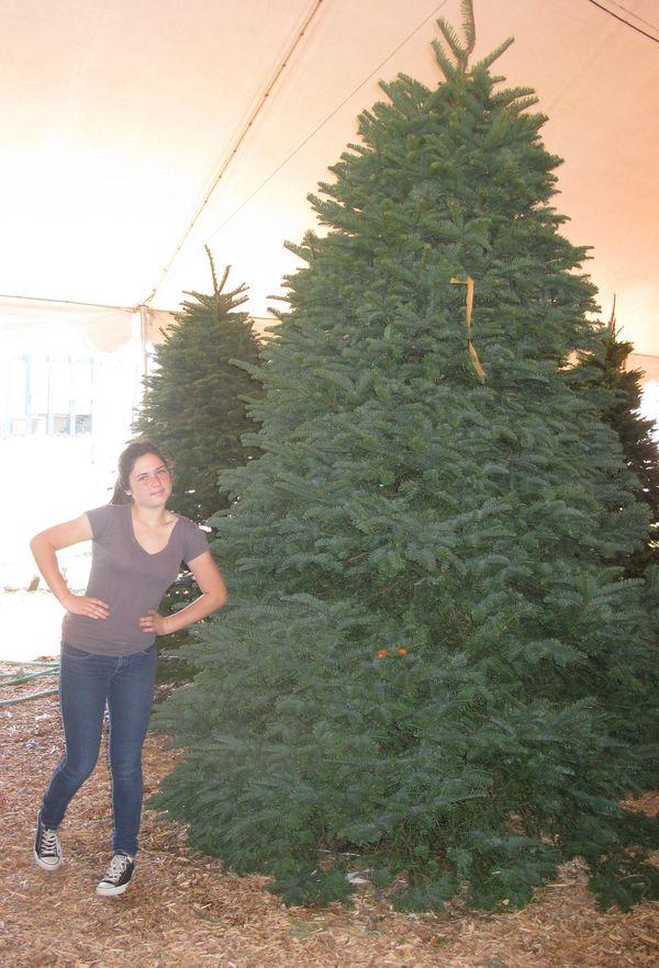 12 foot tree