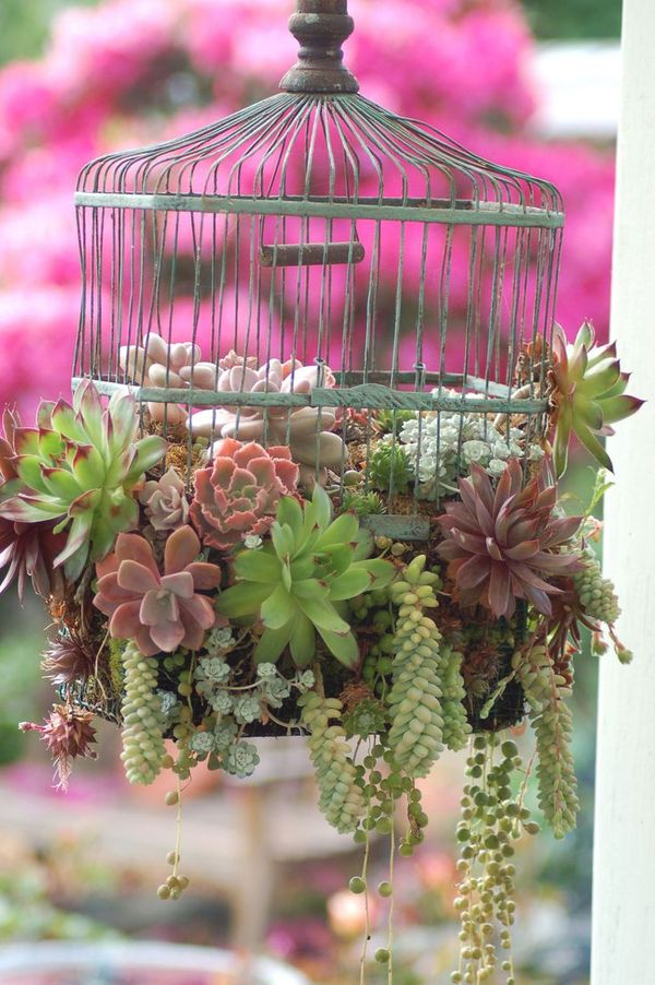 Succulents in the bird cage