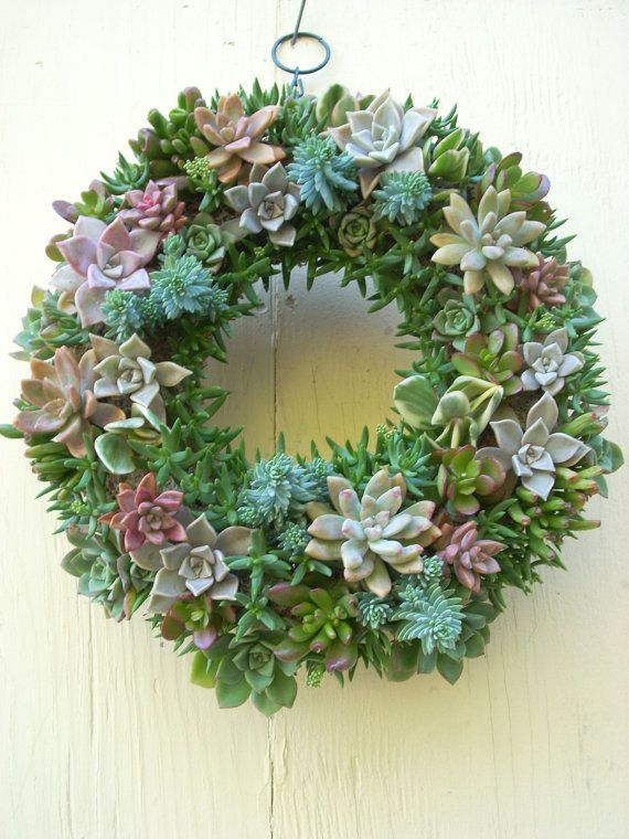Succulet wreath