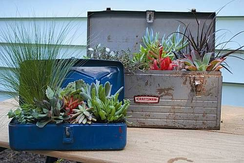 Succulents in tool boxes