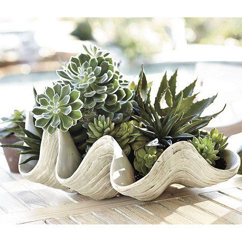 Succulents in clam