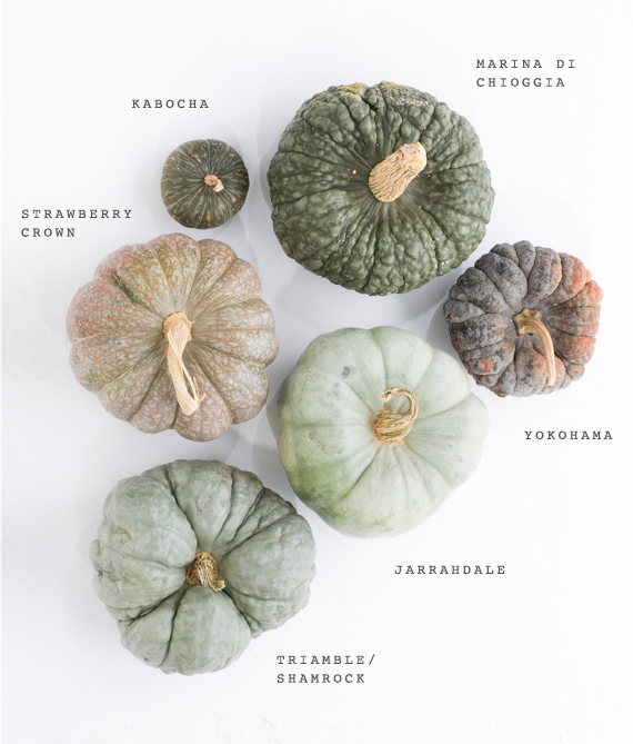Heirloom pumpkin variety