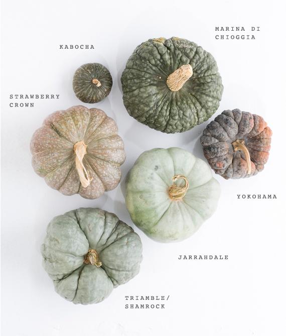 Heirloom pumpkin variety