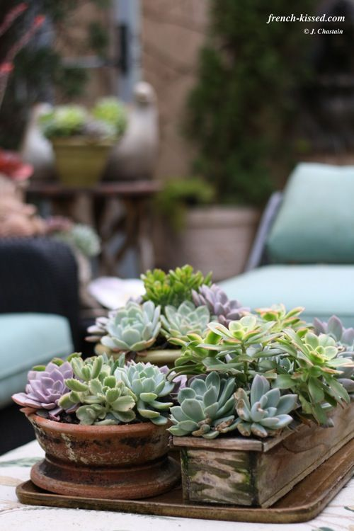 Succulents on the table