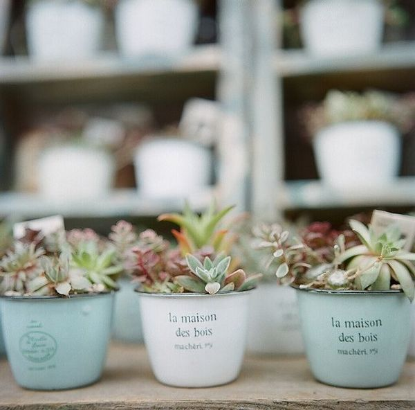 Succulents in enamal cups