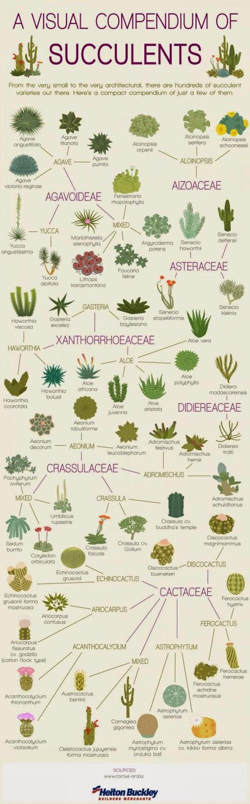 Visual compendium of succulents