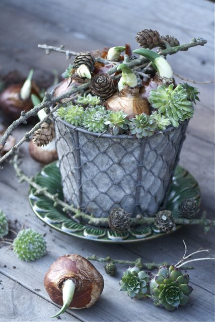 Succulents and bulbs