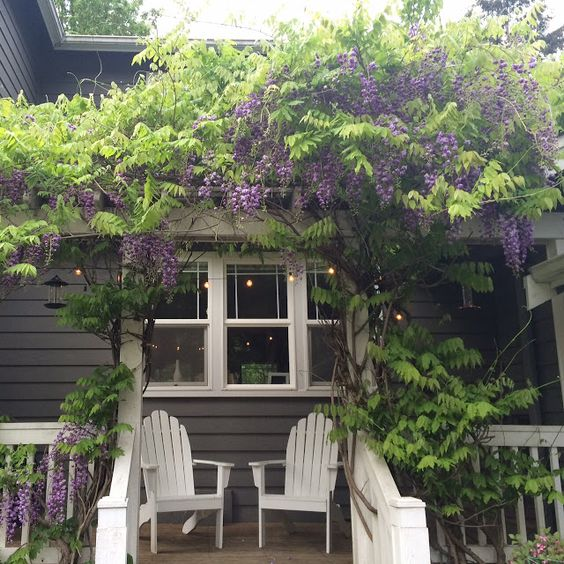 Porch with wisteria