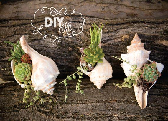 Succulents in shells