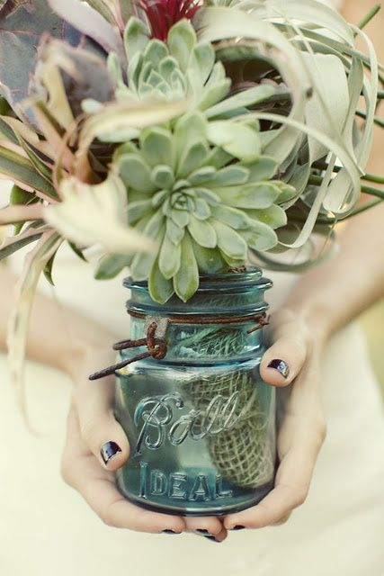 Succulents in a ball jar