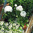 white flower in childs shopping cart