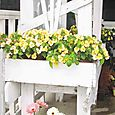 the cottage bench with lots of colorful flowers