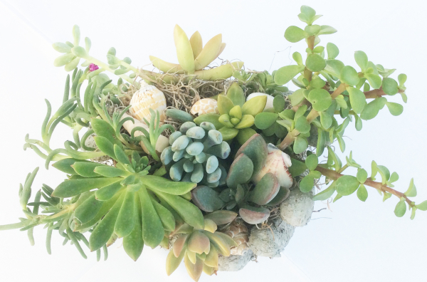 Succulents in palms
