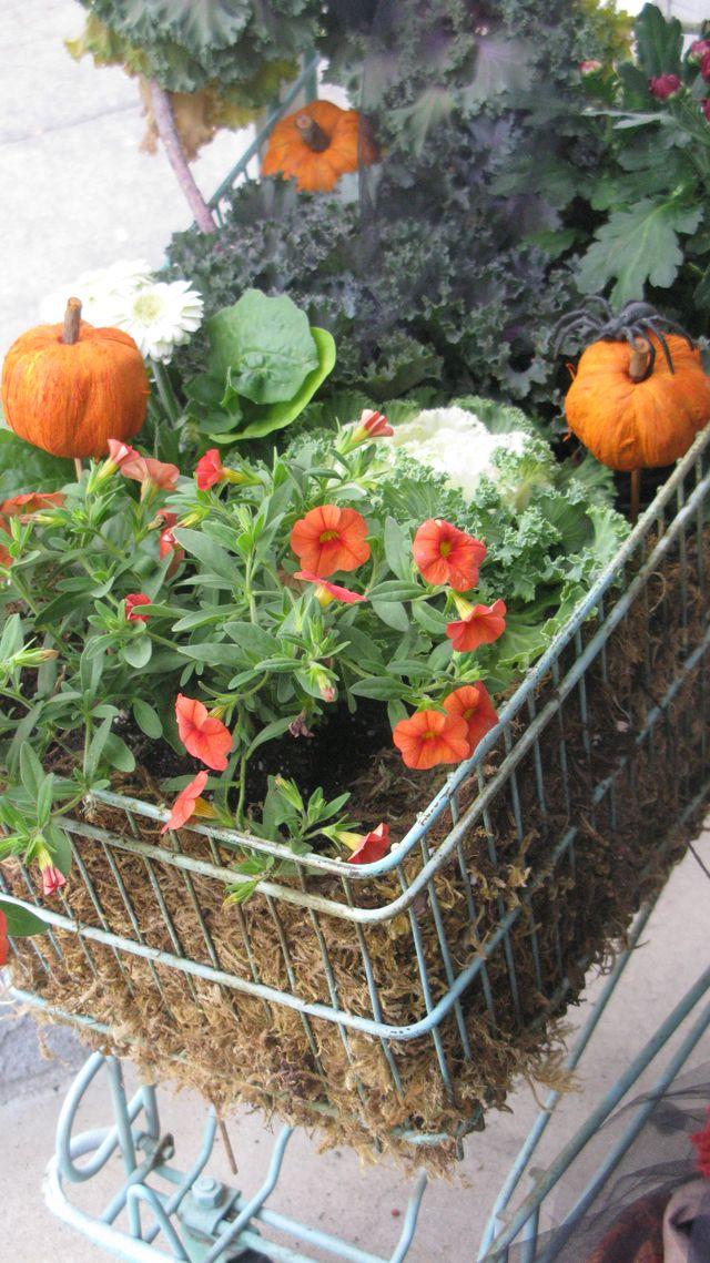 Fall in a Shopping Cart